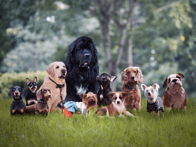 Chcete si zaobstarať psa? Aké plemeno je pre vás najvhodnejšie?