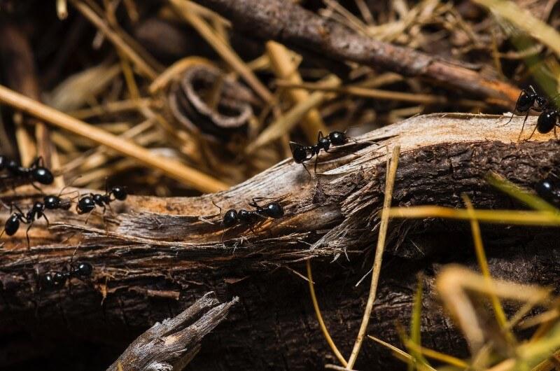 Kde sú deti, tam sú mravce