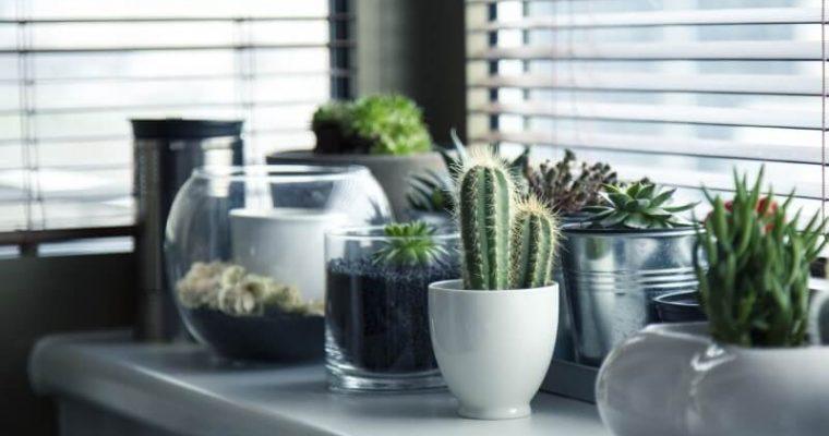 Najkrajšie izbové rastliny do vašej obývačky