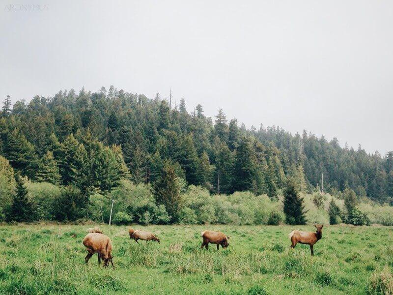 Dávajte si pozor na migrujúcu lesnú zver