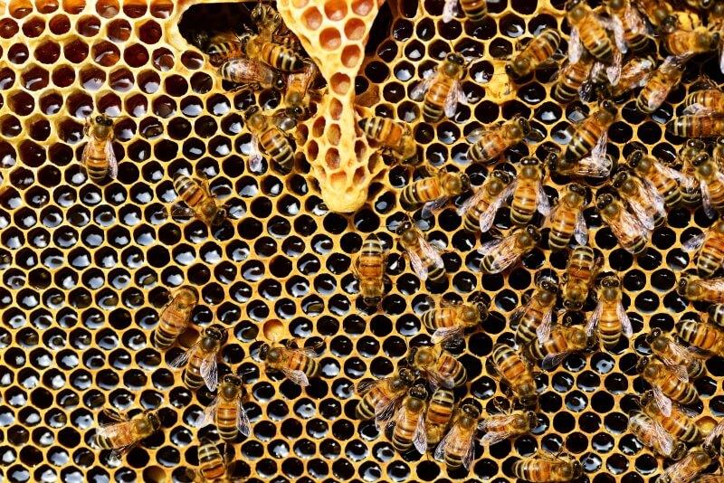 Život včiel je fascinujúci